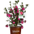 Alabama Beauty Camellia in Branded Pot Main