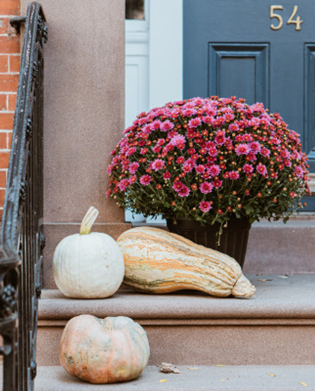 What To Do With Old Pumpkins