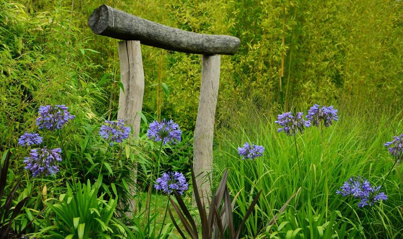 agapanthus-plants-blooming-in-the-garden.jpg