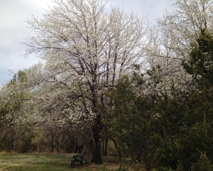 apple-tree-along-river-bank.jpg