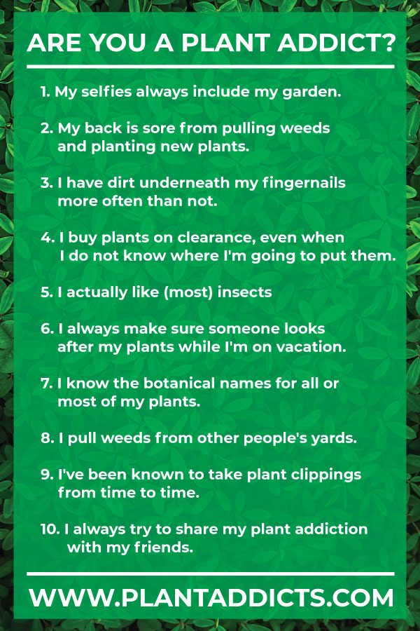Are You A Plant Addict?