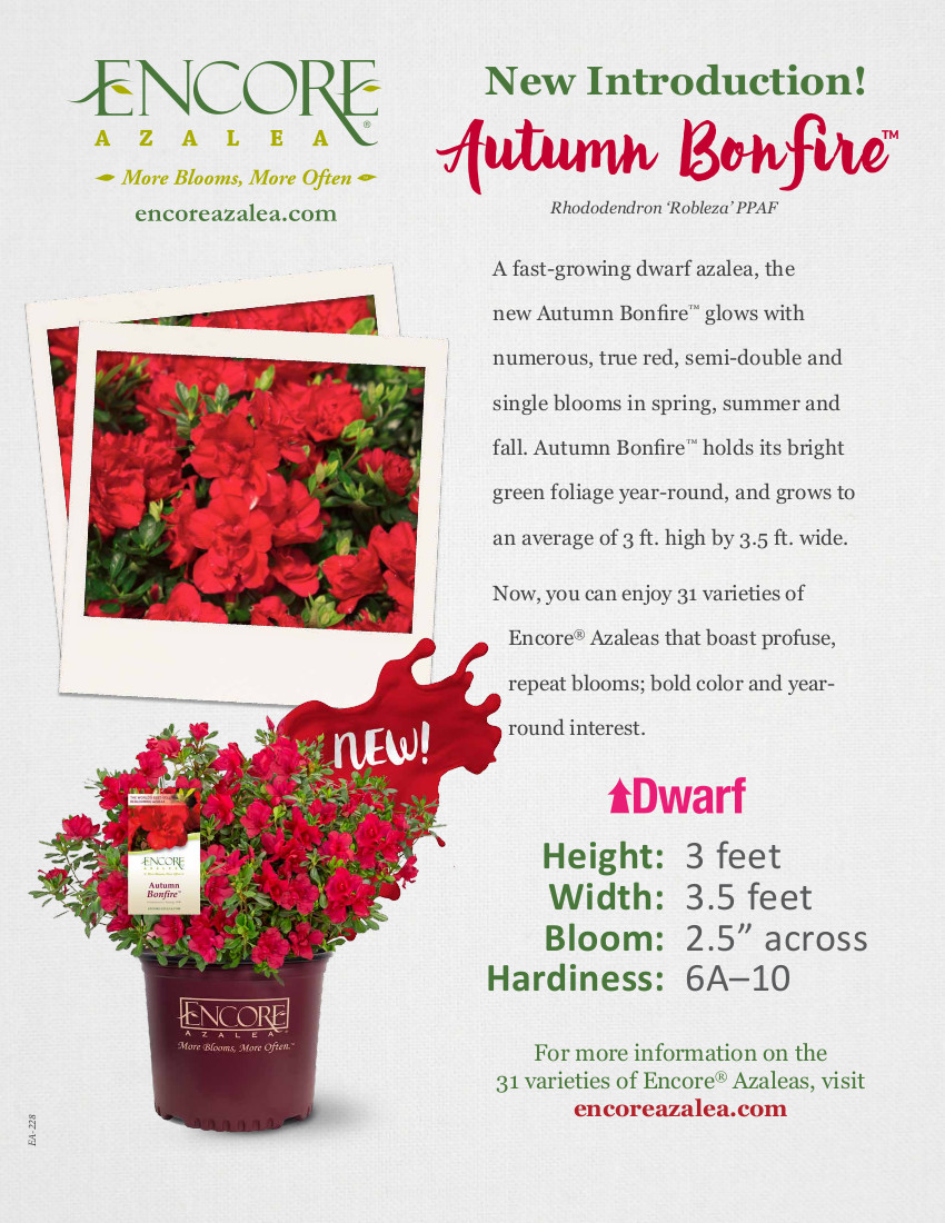 Autumn Bonfire™ Encore® Azalea Plant Facts