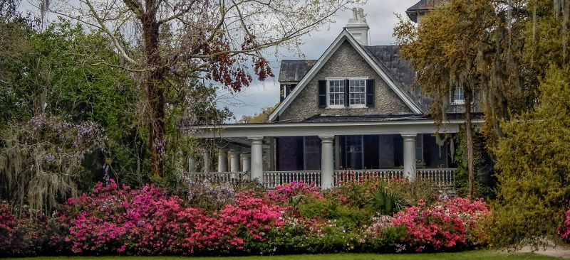 azalea-shrubs-in-front-of-a-house.jpg