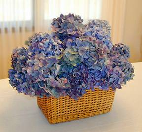 blue-hydrangea-flowers-in-basket-compressor.jpg