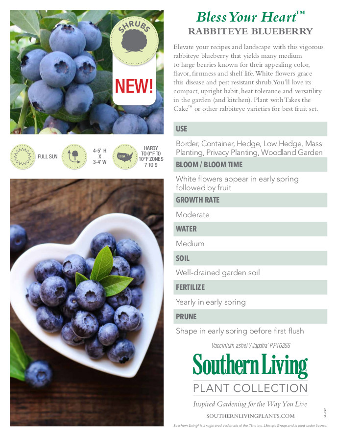 Bless Your Heart Blueberry Plant Facts