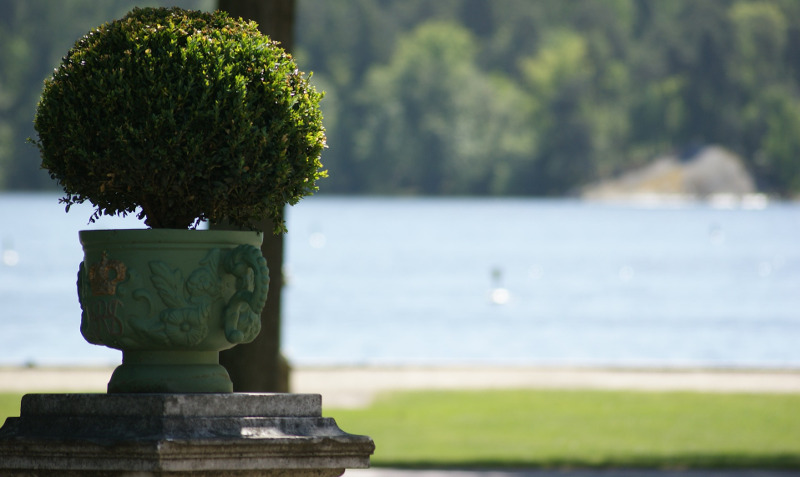 boxwood-in-garden-pot-by-the-lake.jpg