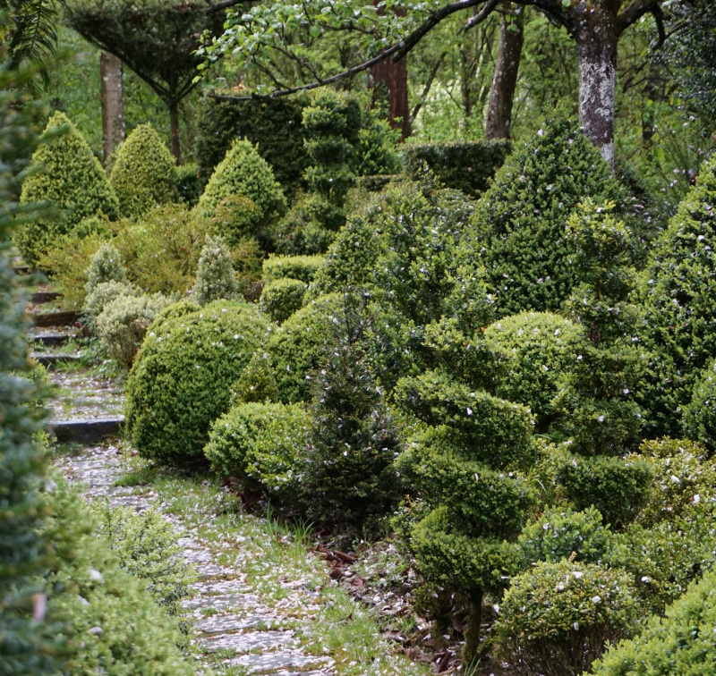 boxwood-shrubs-trees-topiary-next-to-path.jpg