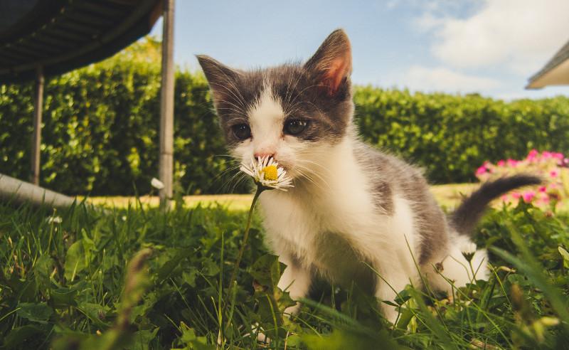 cat-in-the-garden-with-boxwood-shrubs.jpg