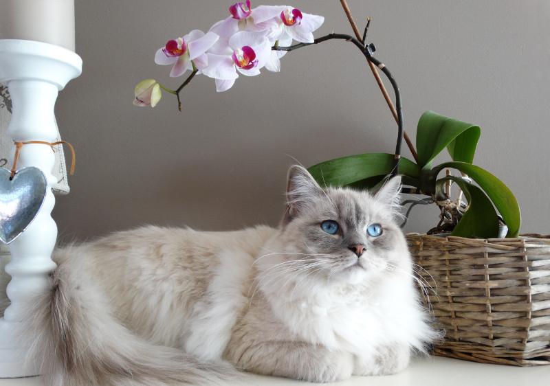 cat-next-to-flower-pot.jpg