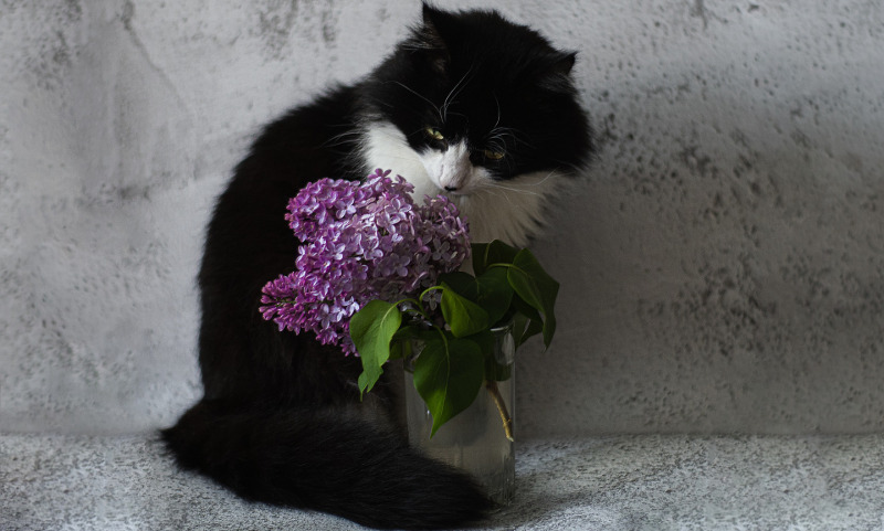 cat-with-lilac-blooms.jpg