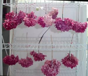 close-up-dyeing-hydrangeas.jpg