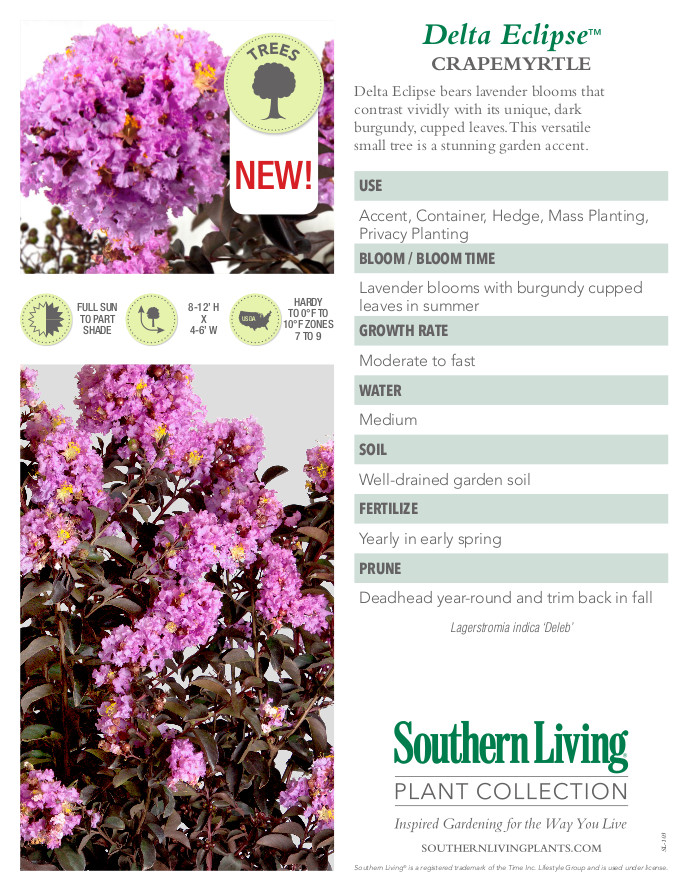 Delta Eclipse Crape Myrtle Plant Facts
