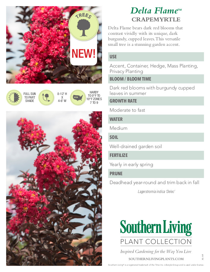 Delta Flame Crape Myrtle Plant Facts