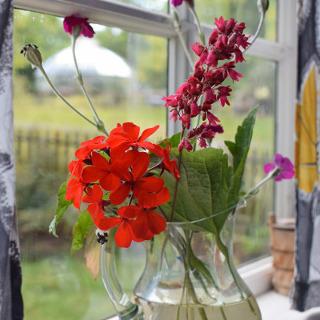 Cut Flower Care
