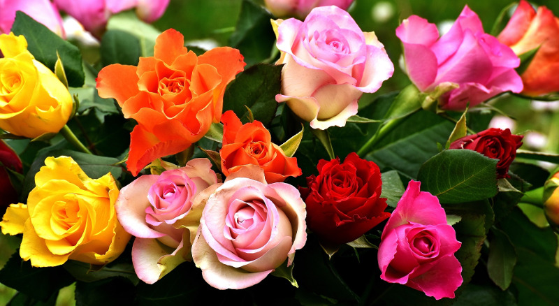 different-types-of-roses.jpg