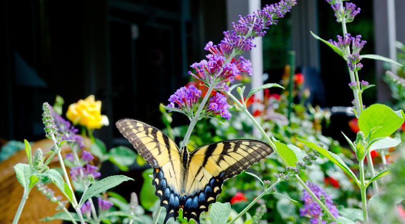 diverse-buterfly-garden.jpg
