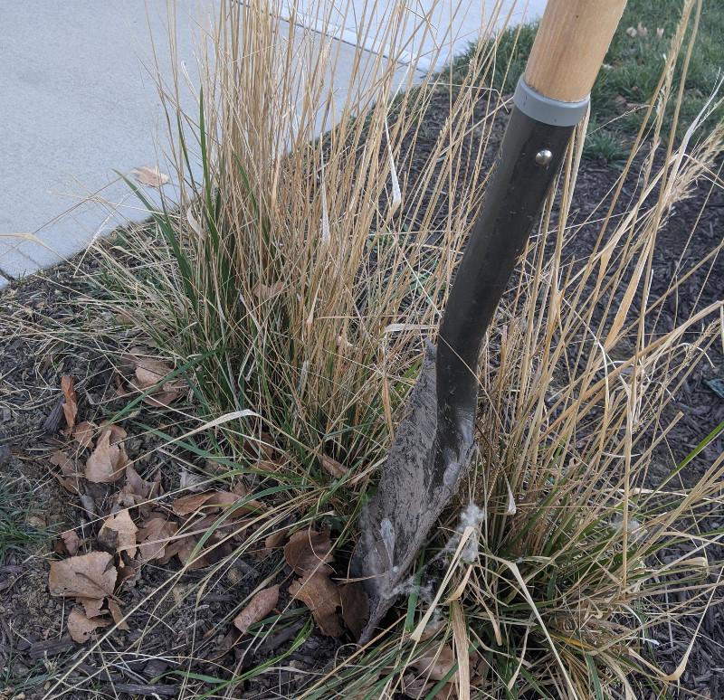 dividing-ornamental-grass-with-spade.jpg