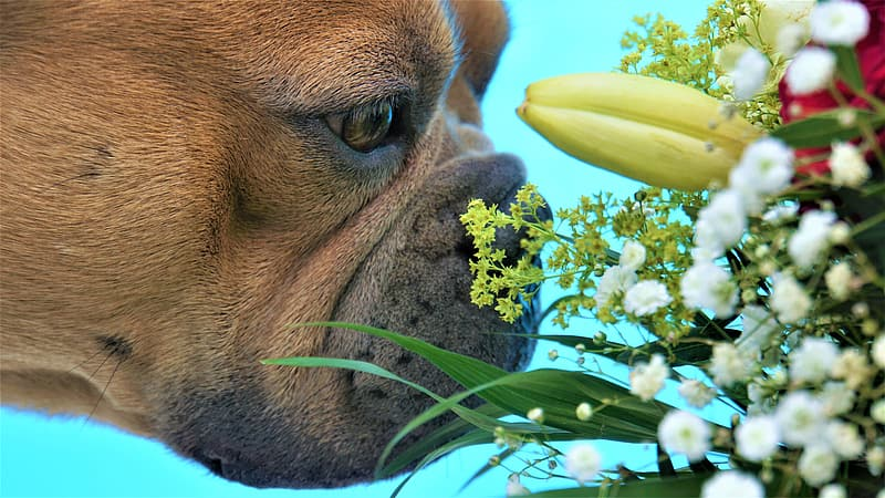 dog-smelling-flowers.jpg