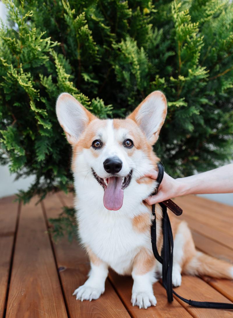 dog-with-arborvitae.jpg