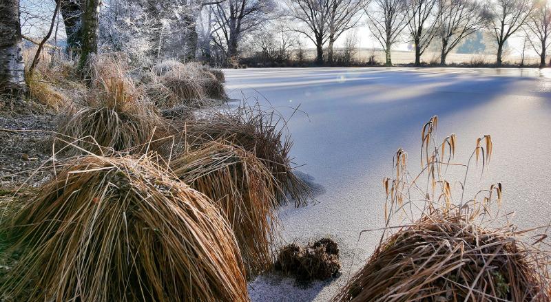 dormant-ornamental-grass-near-a-pond.jpg