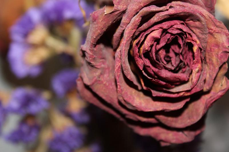 dried-rose-bloom.jpg