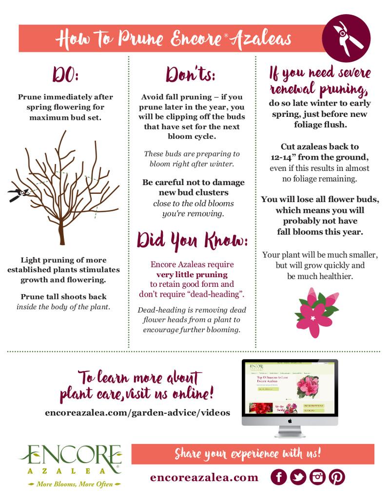 encore-azalea-pruning-instructions-pdf.jpg