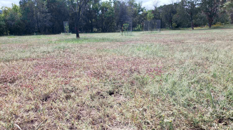 fading-purslane-weed-in-the-field-9.jpg