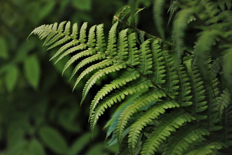 fern-foliage-close-up.jpg