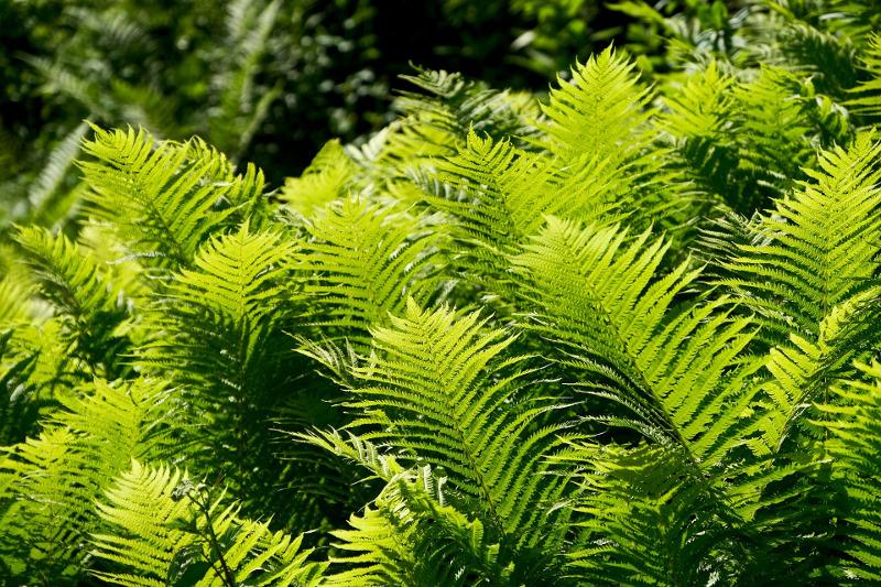 ferns-growing-in-the-sunlight.jpg