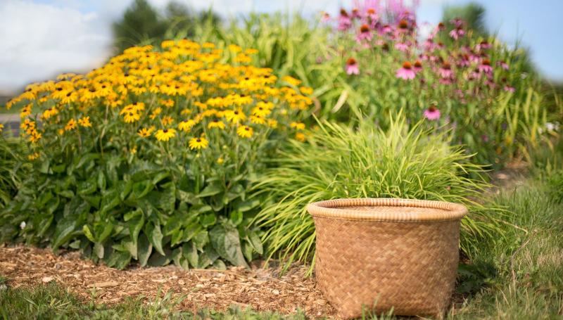 gardening-basket-next-to-coneflower-plants.jpg