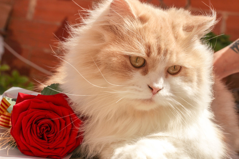 grumpy-cat-with-rose.jpg