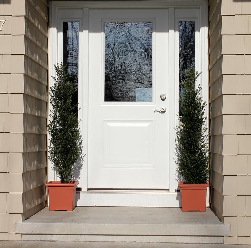 hollies-growing-in-entryway-garden-planters.jpg
