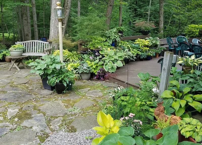 hostas-growing-in-planters-on-the-deck.jpg