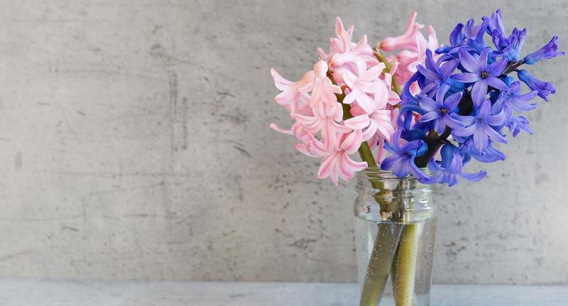 hyacinth-cut-flowers-in-a-vase.jpg