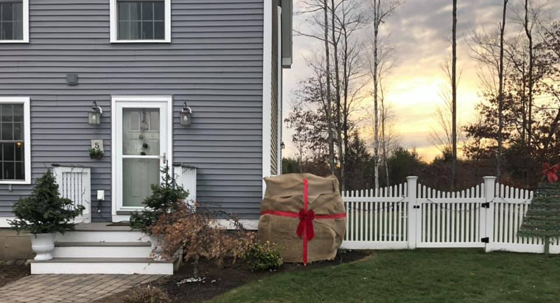 hydrangea-wrapped-up-like-giant-christmas-present.jpg