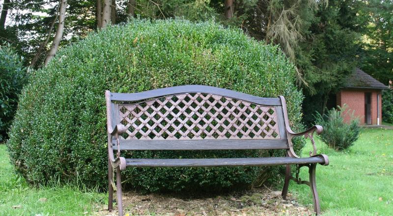 large-boxwood-shrub-behind-bench.jpg