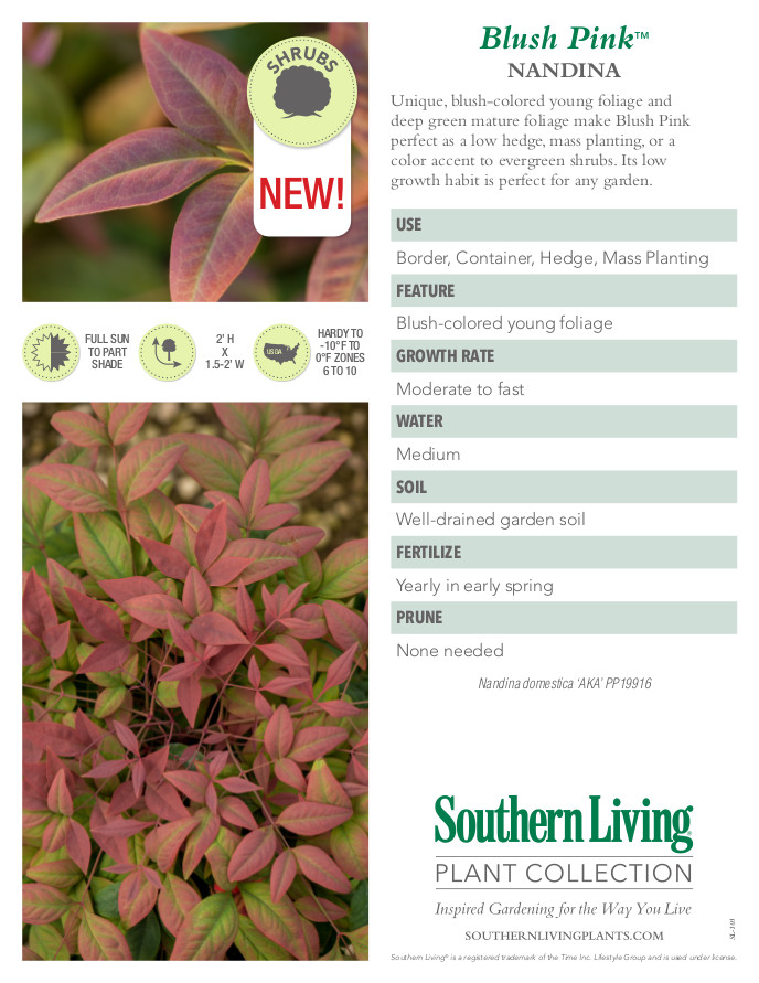 Blush Pink Nandina Plant Facts