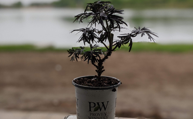 new-quart-sized-plant.jpg