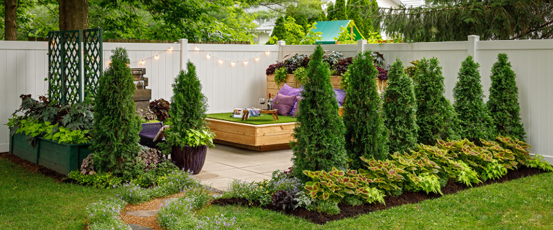 north-pole-arborvitae-growing-as-a-privacy-hedge-around-the-patio.jpg
