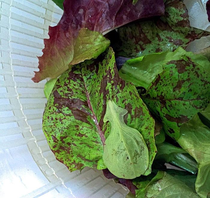 organic-mesclun-leaves-in-lettuce-spinner.jpg