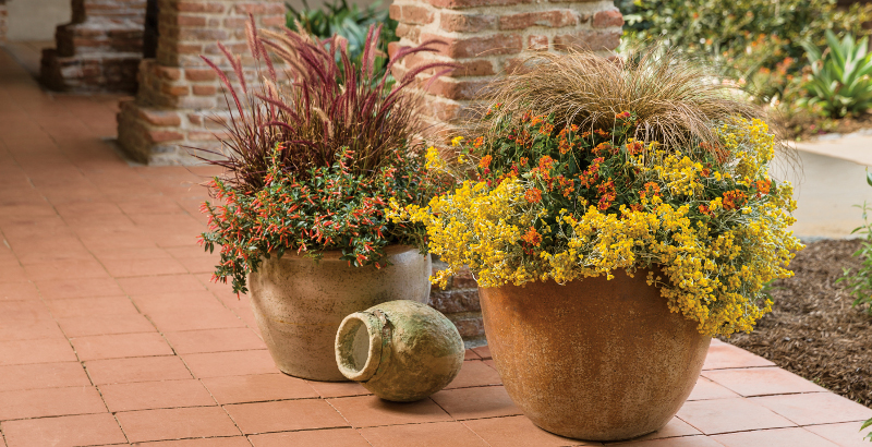 ornamental-grass-in-planters.jpg