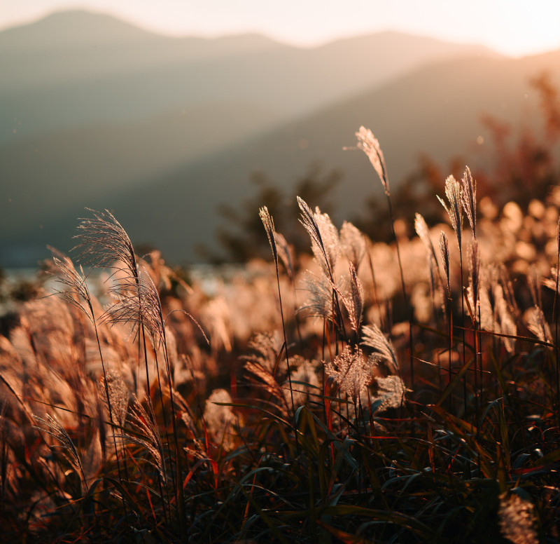 ornamental-grass-in-the-sunlight.jpg