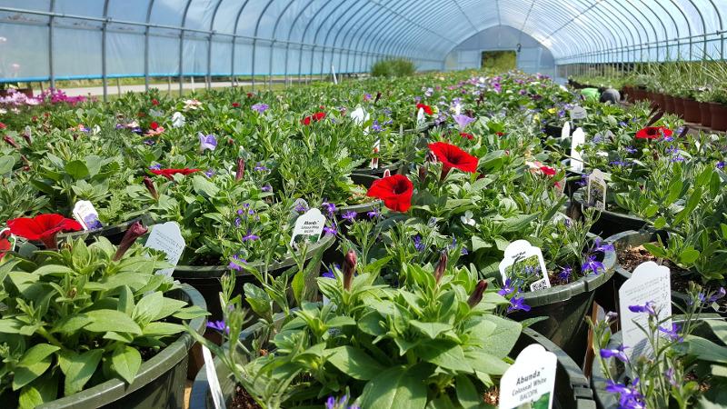 plant-nursery.jpg
