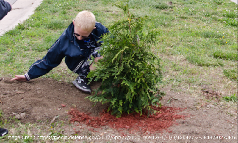planting-a-green-giant-arborvitae.png