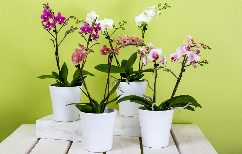 pretty-orchid-plants-blooming.jpg