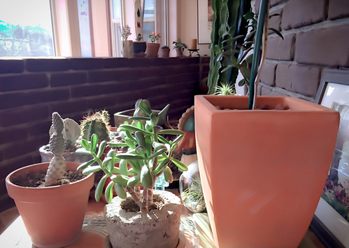 propagated-succulents-from-cuttings.jpg