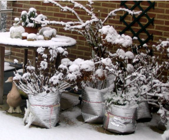 protecting-planters-in-winter.png