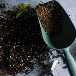 Can You Reuse Potting Soil