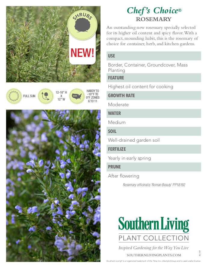 Chef's Choice Rosemary Plant Facts