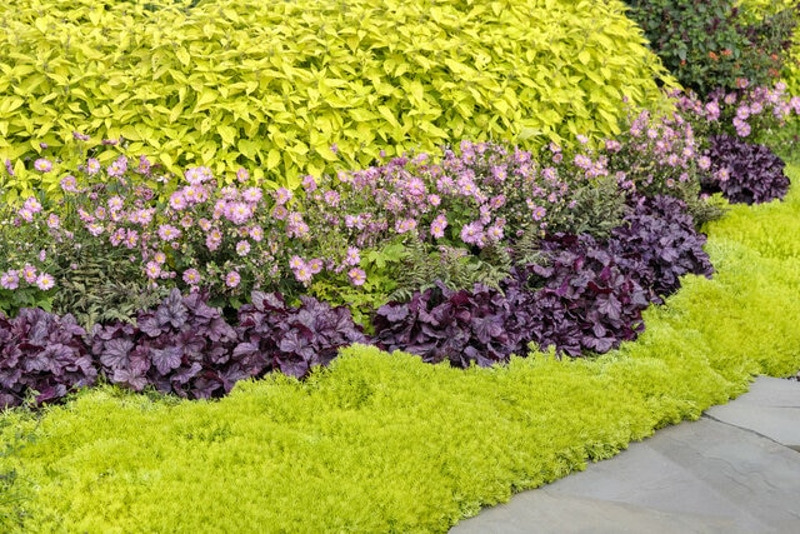 sedum-growing-next-to-sidewalk-and-other-plants-in-a-row.jpg